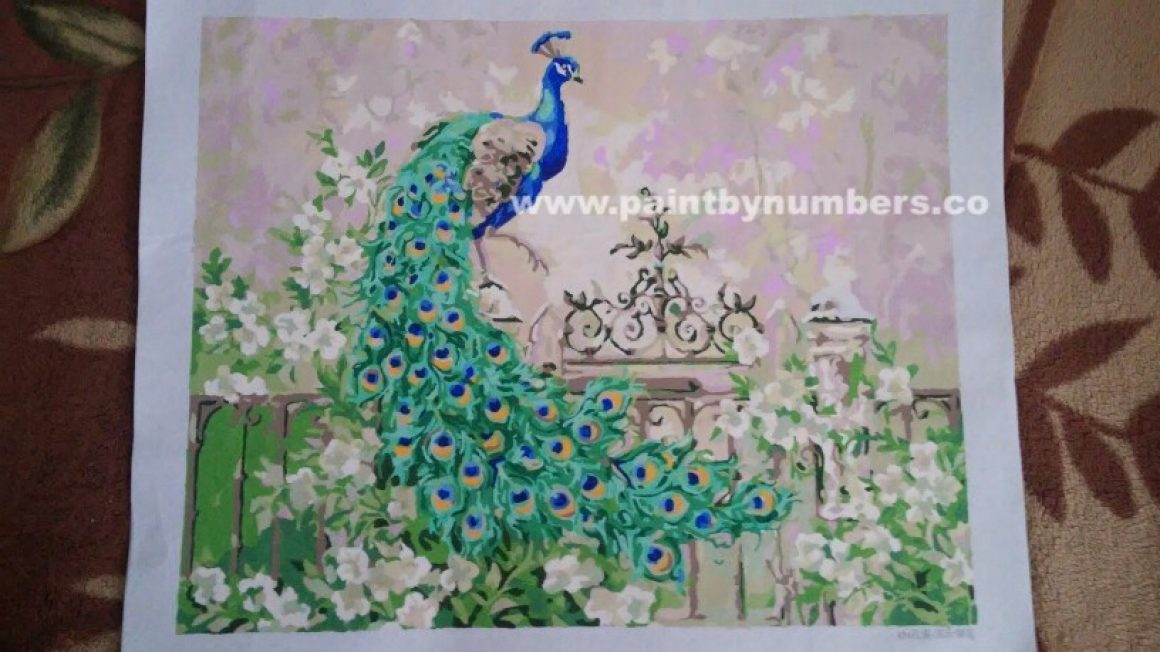 Peacock with green feathers01
