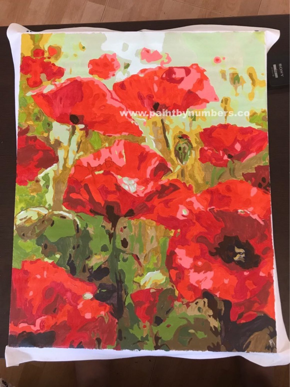Poppies close up8