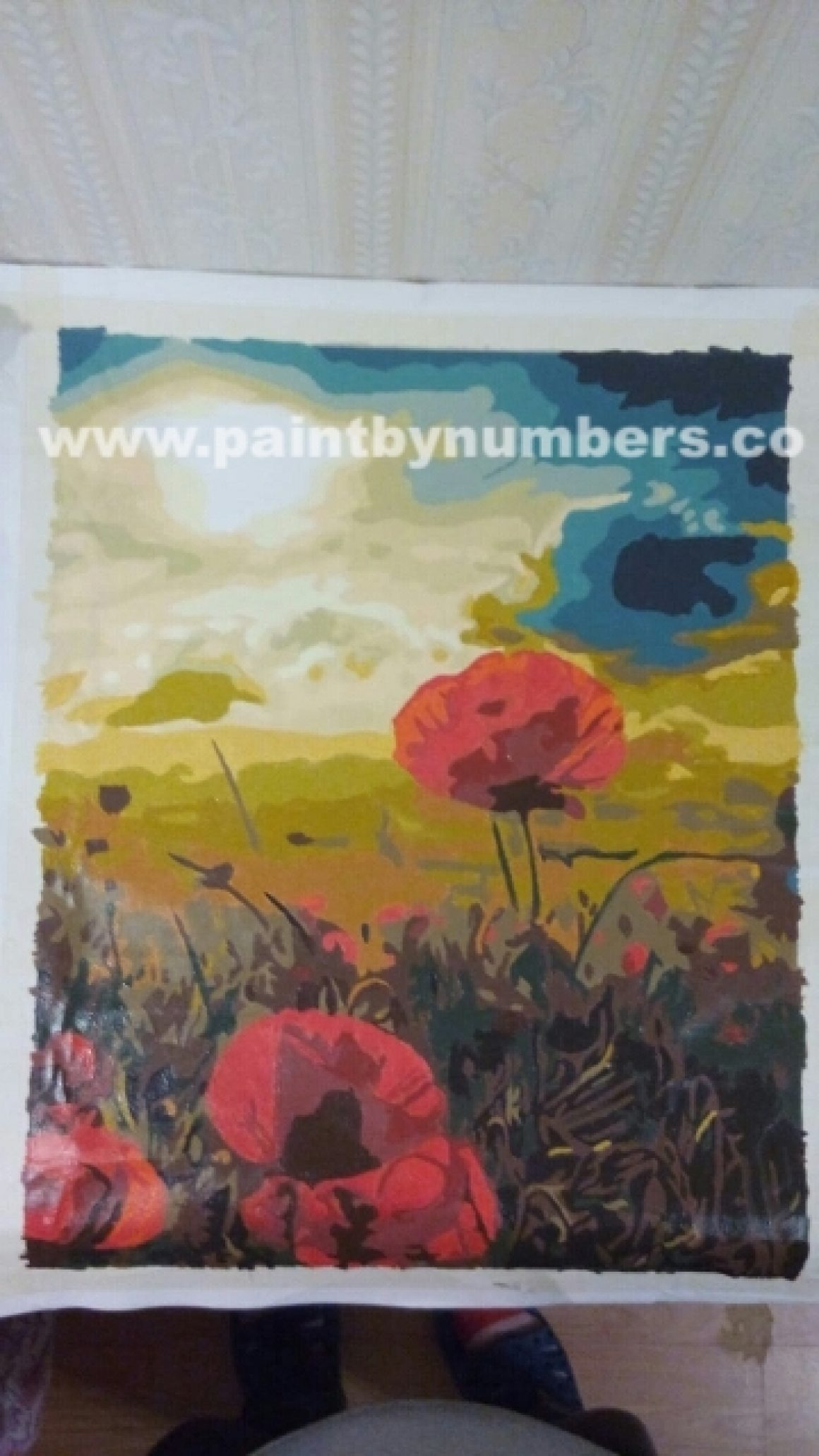 Poppies under the sky1
