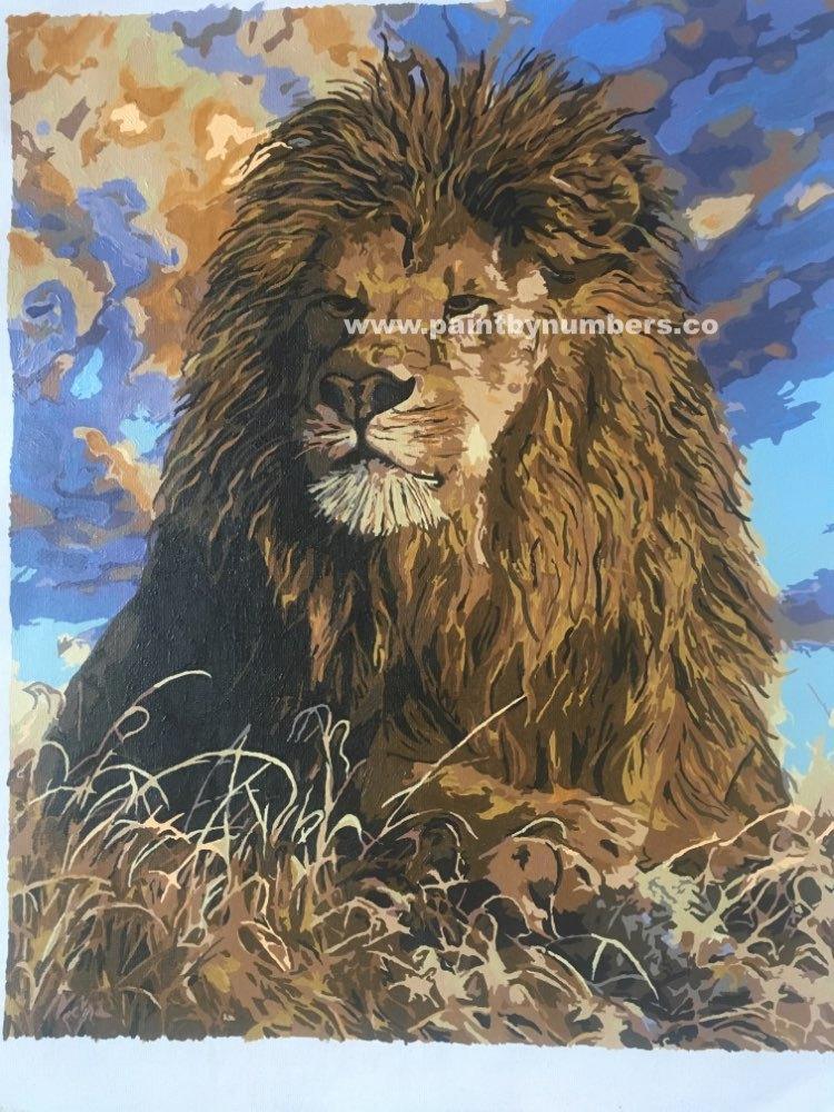Proud Lion2