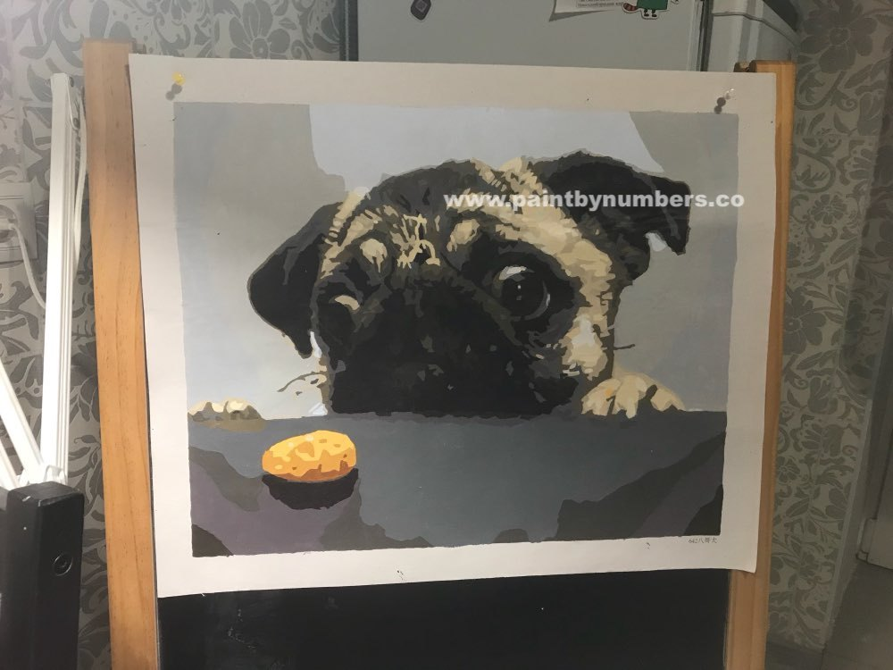 Pug and a cookie2