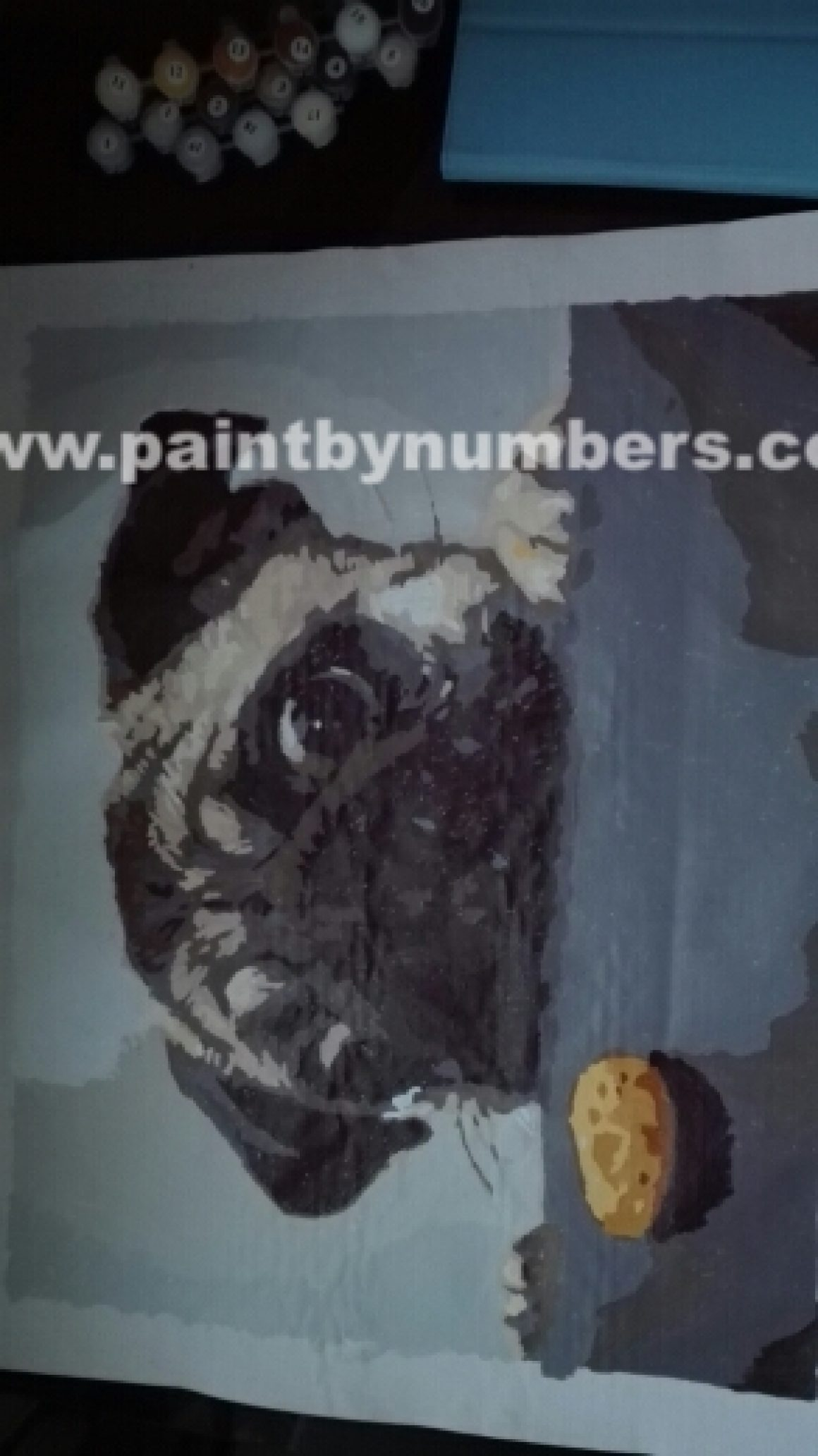 Pug and a cookie4