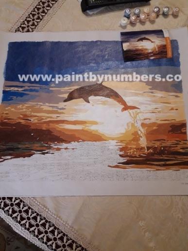 Sunset Dolphin6