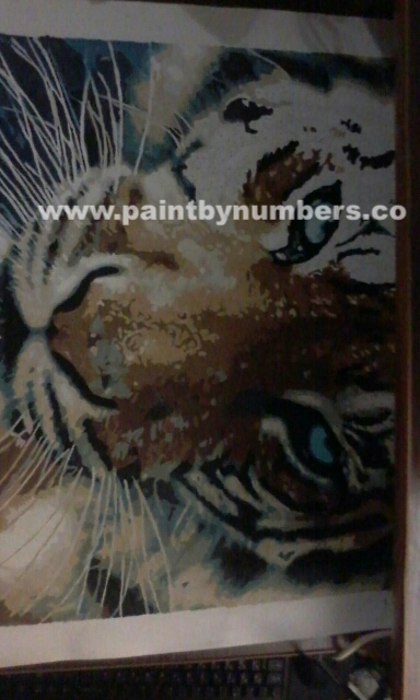Tiger closeup2
