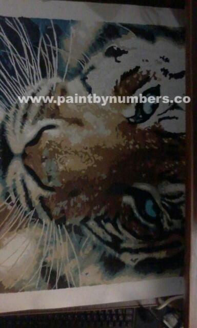 Tiger closeup2