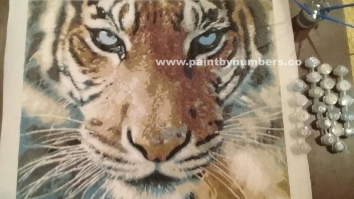 Tiger closeup3
