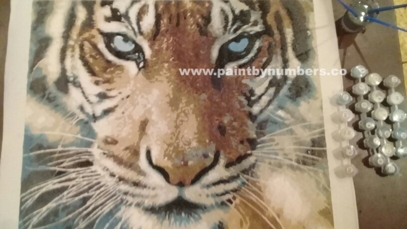 Tiger closeup3