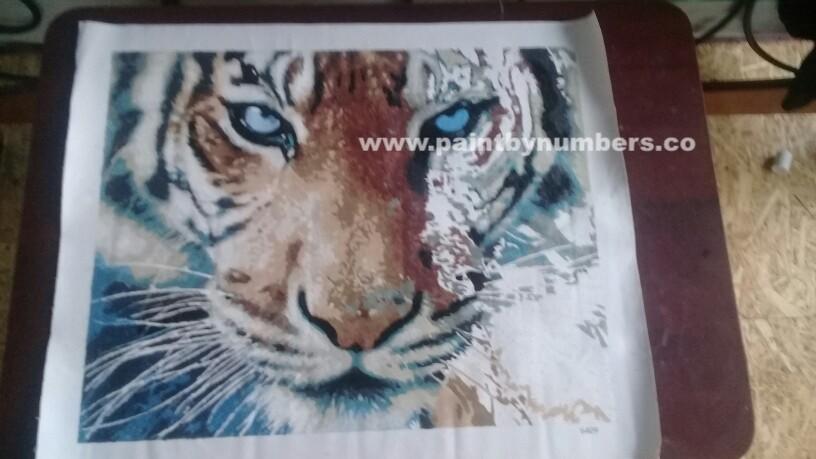 Tiger closeup4