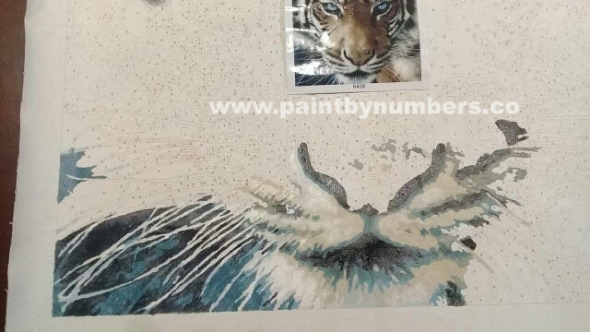 Tiger closeup55