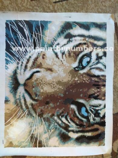 Tiger closeup77