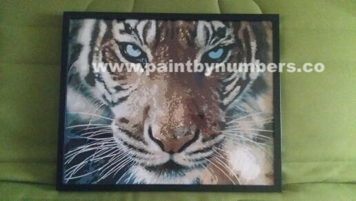 Tiger closeup8