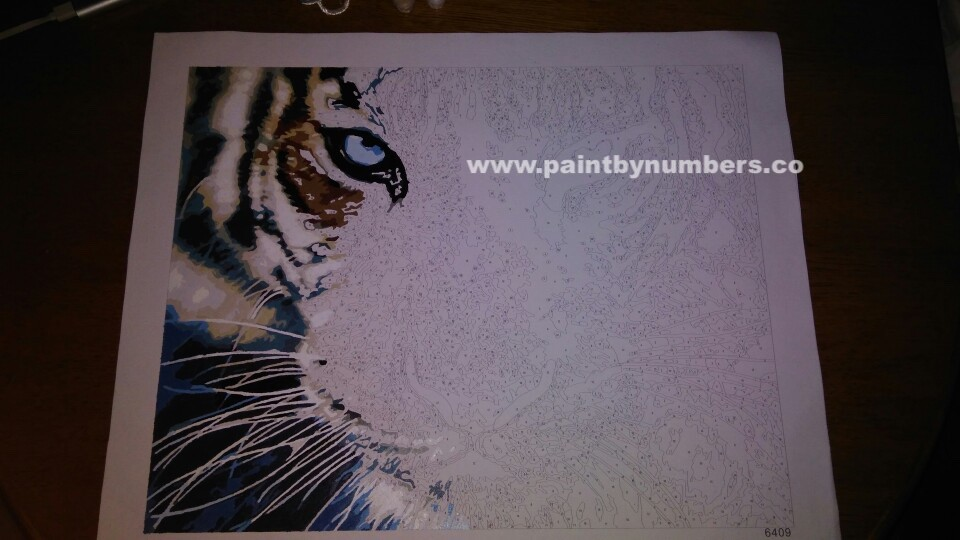 Tiger closeup9