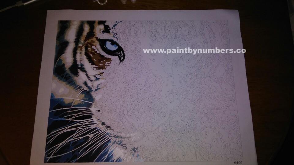 Tiger closeup9