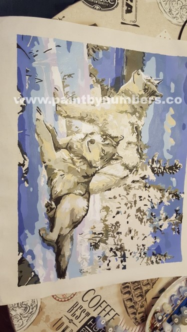 Two white wolves in the snow 66