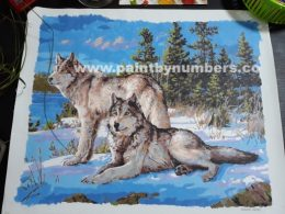 Two white wolves in the snow12