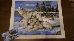 Two white wolves in the snow15