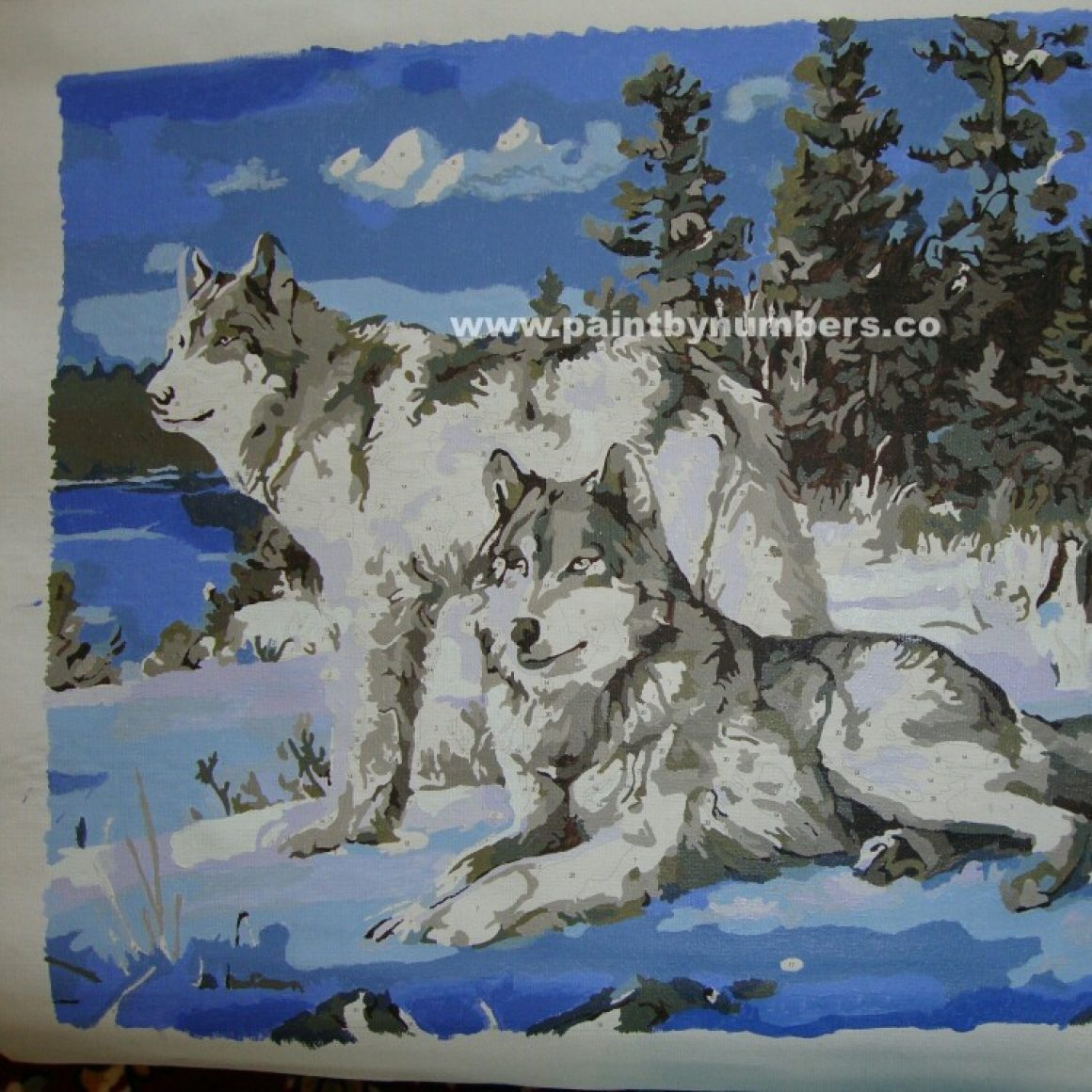 Two white wolves in the snow3