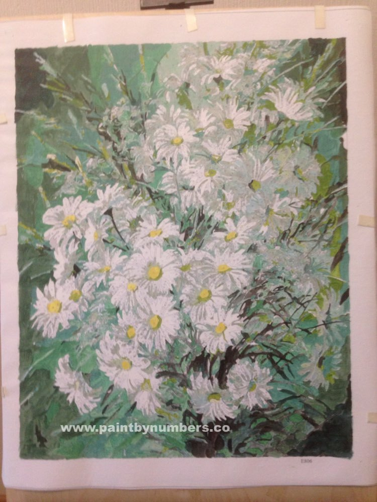 White Daisies Bunch3