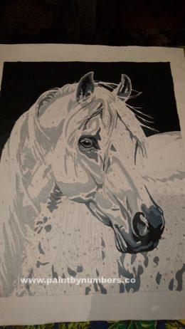 White horse1