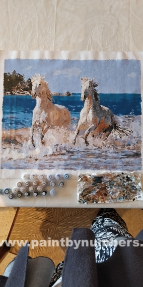 White horses in the water4