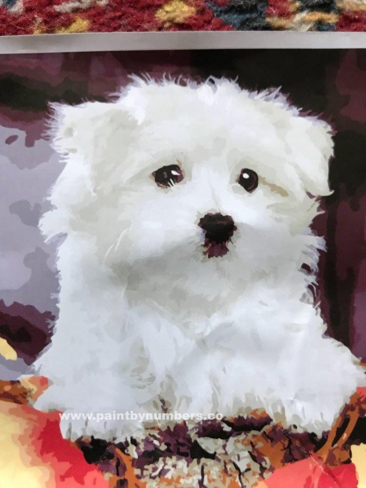 White puppy dog1