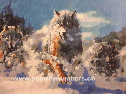 Wolves running in snow03